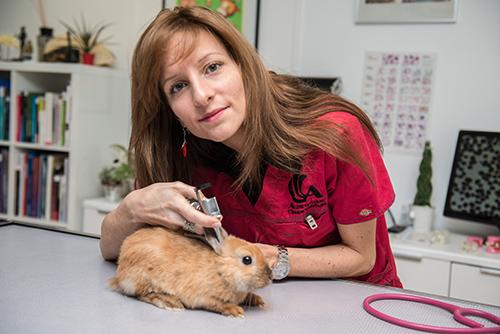 Clinique vétérinaire Alizee Vet - Paris 14eme - Site - NAC
